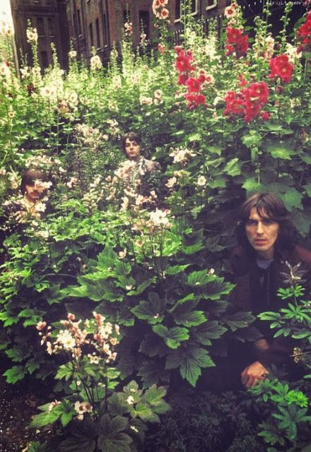More Beatles in flowers